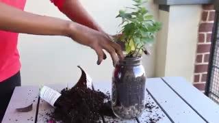 کاشت گیاهان در ظرف شیشه ای