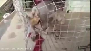 گرفتن موجود عجیبی در قفس