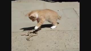 شوخی بچه گربه و مار
