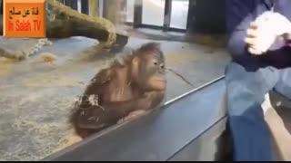 تابه حال خنده میمون دیده بودید؟؟