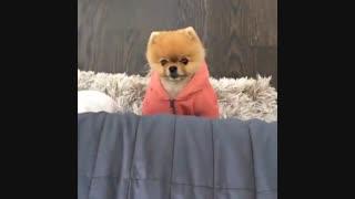 Cuty dog+توضیحات مهم