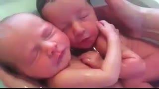 ویدیو فوق العاده زیبا از شستن دو نوزاد دوقلو که هنوز باورشون نمیشه به دنیا اومدن