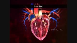 ساختار قلب انسان