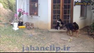 وحشت سگ از شیر