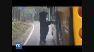 باغ وحش وارونه در چین که در آن شما زندانی می شوید و حیوانات  درنده به تماشای شما می آیند