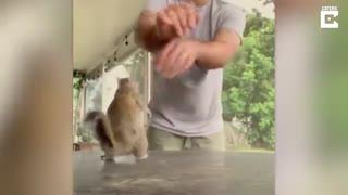 این سنجاب عاشق بازی کردنه!