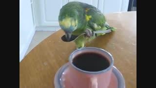 قهوه دوست داره!!