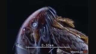 کک زیر میکروسکوپ