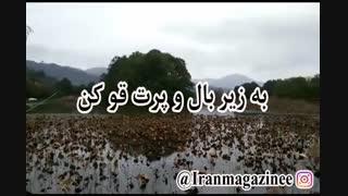 جهان فاسد مردم را - محسن چاوشی