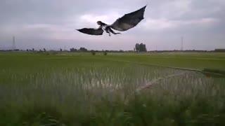 Dragon on the farmland -  اژدها در زمین کشاورزی