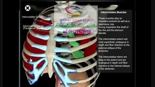 بهترین مراکز کاردرمانی ،روش های ریلکس کردن عضلات بعد از تمرین|گفتارتوان گستر البرز
