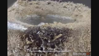 میتونین اجسام زوم شده در ویدئو رو حدس بزنین؟