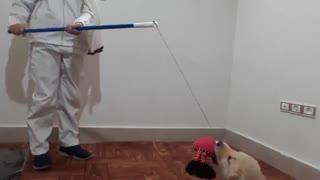 آموزش بازی با سگ خانگی