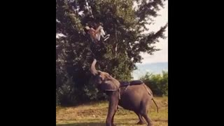 نمایش آکروباتیک فیل وفیلبان-1